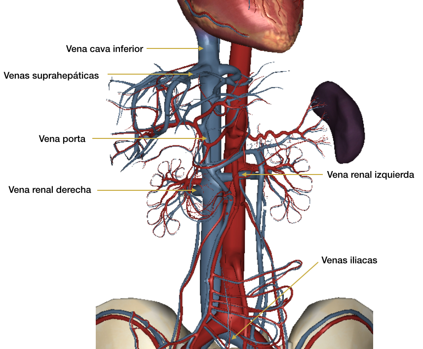 Curso de Ecocardiografía básica para no cardiólogos